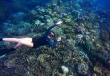 Person svømmer rundt om koralrev med snorkel